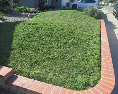 Landscapes drought tolerant plants del mar california ca for Low water landscaping plants