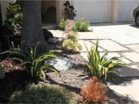 Drought Tolerant & Low Water Use Landscapes